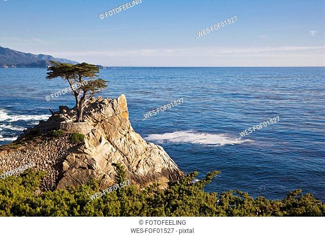 USA, California, Monterey, 17 Mile Drive, Cypresses