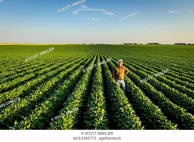Agriculture - Portrait of a farmer holding several soybean plants while inspecting his mid season soybean crop / Iowa, USA