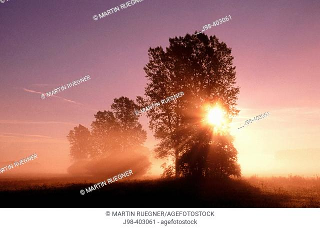 Sunbeams with tree. Morning mood with morning fog. Franconia. Bavaria. Germany