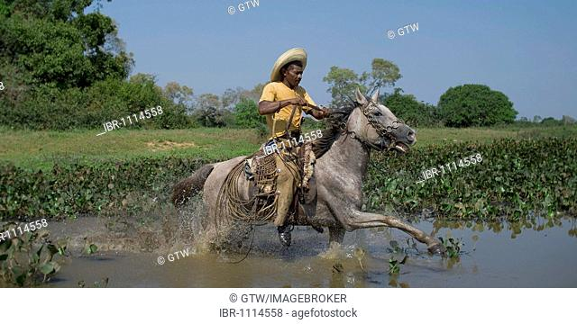 Pantanal cowboy galloping through the water, Pantanal, Brazil