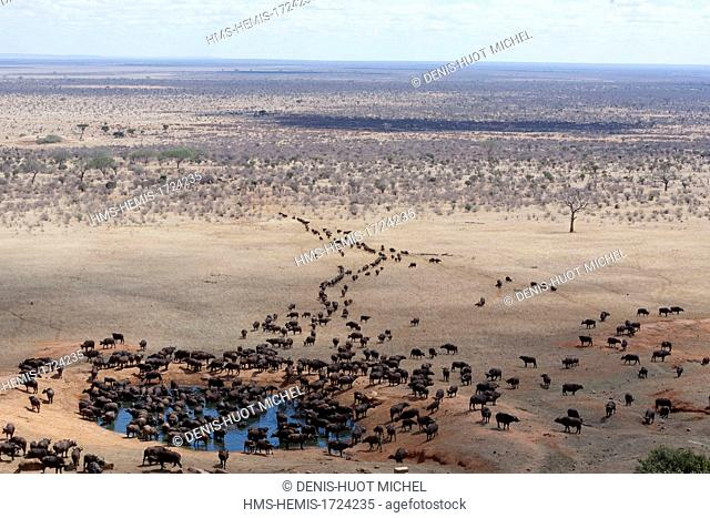 Kenya, Tsavo East national park, African buffalo (Syncerus caffer), herd drinking in front of Voi lodge (aerial view)