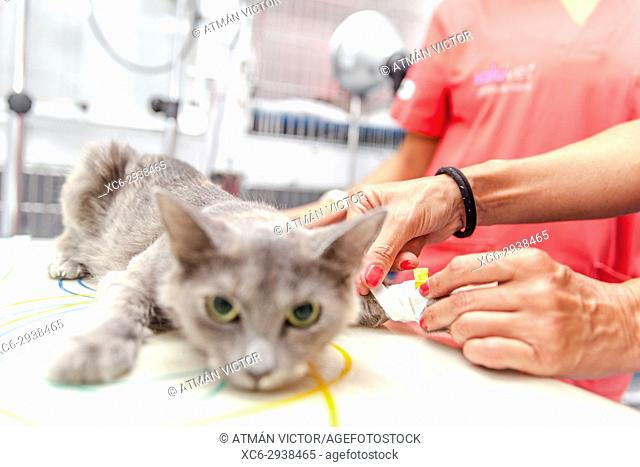 cat at the vet's undergoing surgery