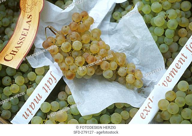 White grapes on a market stall in Provence