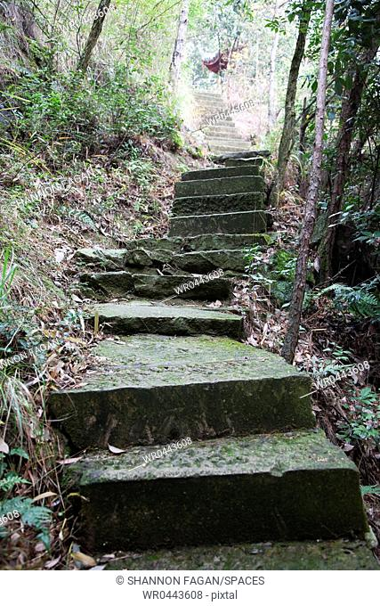 Concrete Stairs in the Woods