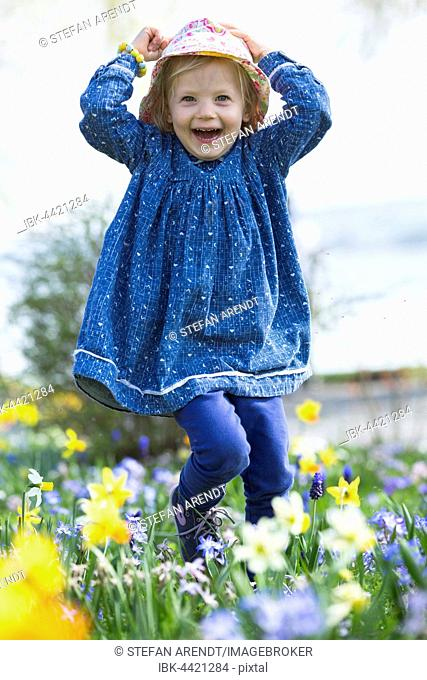 Little girl running through a flowery meadow of daffodils, Lake Constance, Germany