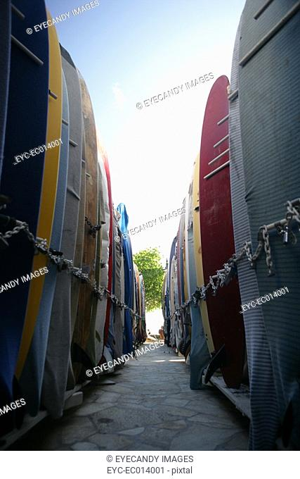 View of surfboards aligned in a row