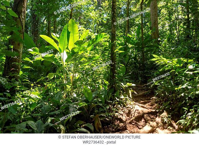 Costa Rica, Limón, Manzanillo, Manzanillo National Park, Hiking Trail
