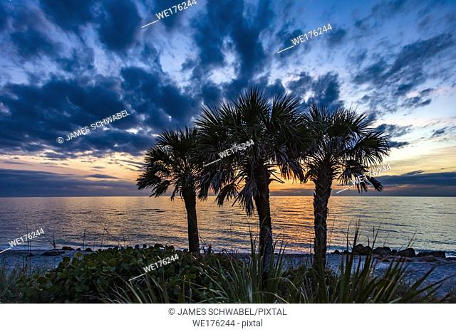 Palm trees silhoutted by dramatic blue sky with dark clouds at sunset at Caspersen Beach on the Gulf of Mexico in Venice Florida