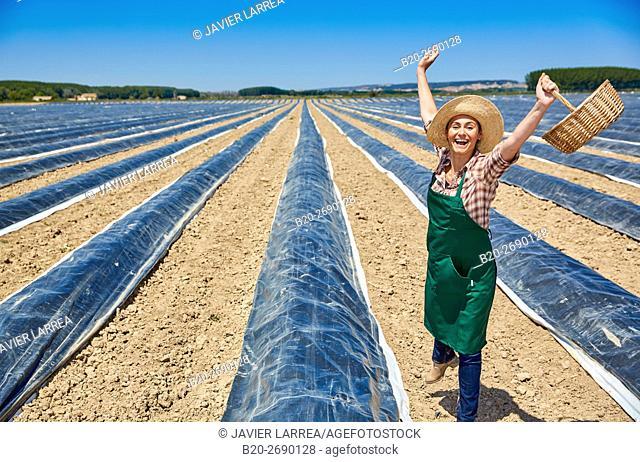 Farmer, Growing asparagus, Agricultural field, Cadreita, Navarre, Spain
