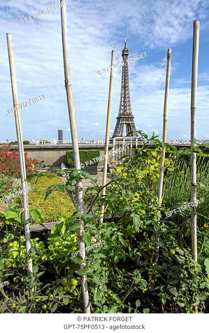 VEGETABLE GARDEN, GARDEN WITH VIEW OF THE EIFFEL TOWER, ROOF TERRACE OF THE CITY OF ARCHITECTURE AND HERITAGE, PALAIS DE CHAILLOT, 16TH ARRONDISSEMENT