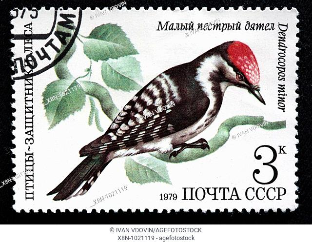 Lesser Spotted Woodpecker Picoides minor, postage stamp, USSR, 1979