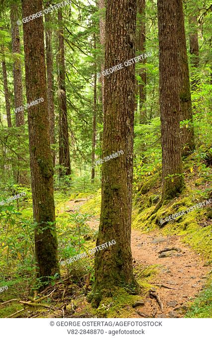 South Breitenbush Gorge National Recreation Trail, Willamette National Forest, Oregon