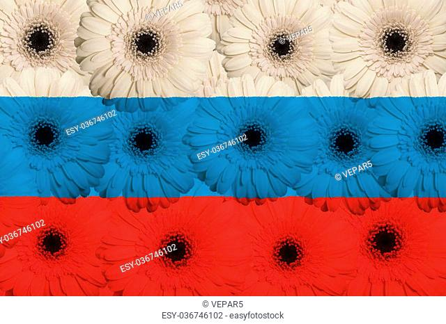 stylized national flag of russia with gerbera daisy flowers as concept and symbol of love, beauty, innocence, and positive emotions
