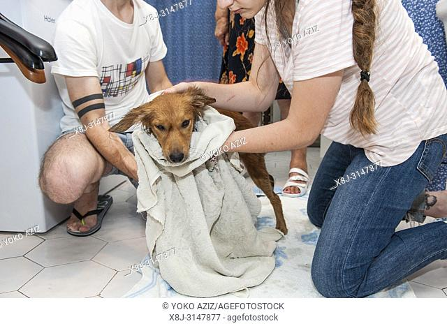 Italy, Cuggiono, Abeera, bath to the dog