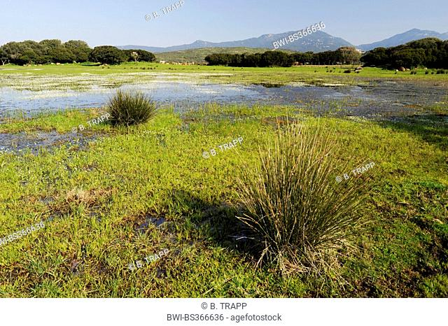 flooded pasture, France, Corsica