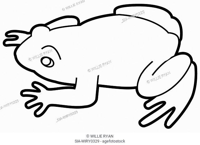 Frog on white background
