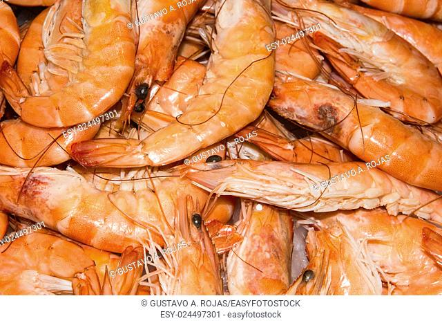 Backgrounds Shrimp - Seafood