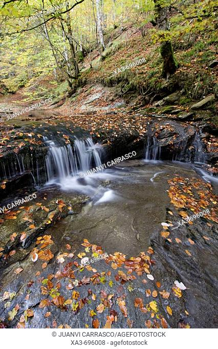 Creek in autumn, Irati forest. Navarra, Spain