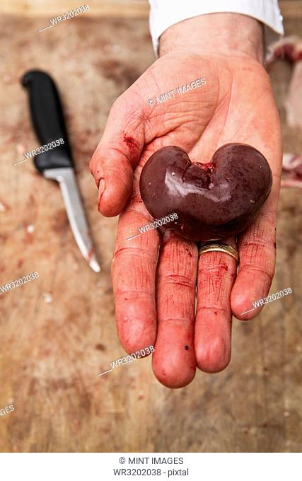 A butcher holding a fresh lamb kidney on the palm of his hand