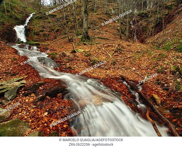 Marianegre stream waterfalls. Winter beech forest (Fagus sylvatica). Montseny Natural Park. Barcelona province, Catalonia, Spain