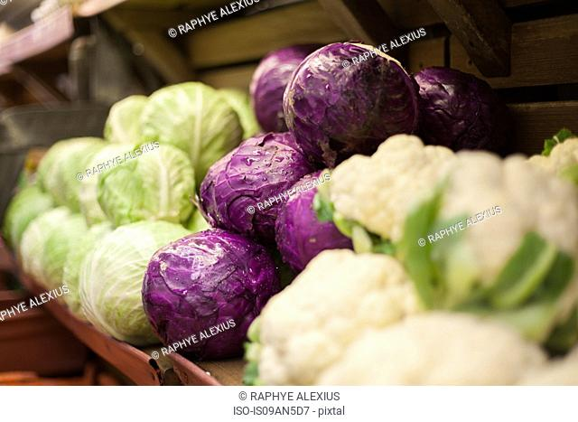 Row of cauliflowers and cabbages in health food shop