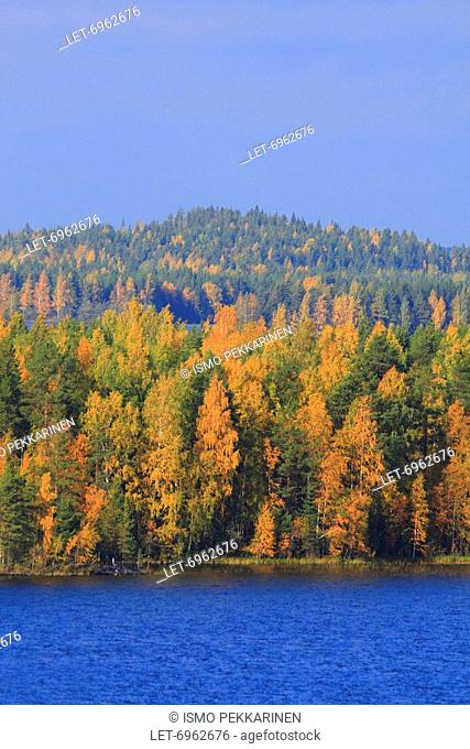 The Höytiäinen Lake and the forest glowing with autumn tints in Kontiolahti, Finland