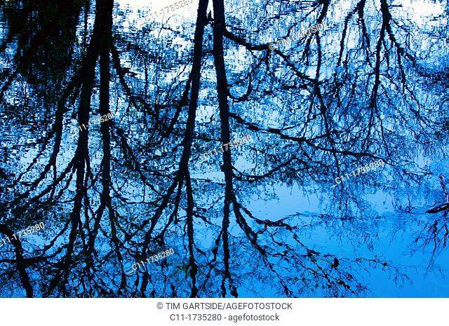 trees reflected in water,Connelles, Eure, Normandy, France, Europe