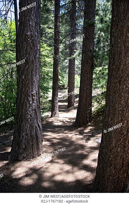 Lake Arrowhead, California - The Sequoia hiking trail at the Heaps Peak Arboretum in San Bernardino National Forest