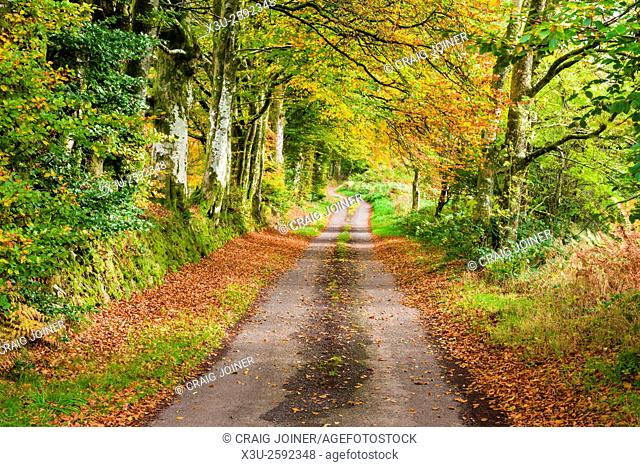 Country lane in autumn. Exmoor National Park near Oareford, Somerset, England