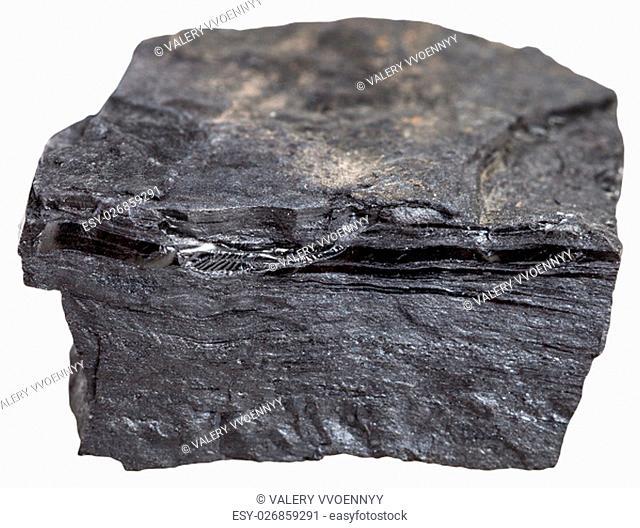 macro shooting of metamorphic rock specimens - carbonaceous shale stone (bone coal, slaty coalbone) isolated on white background