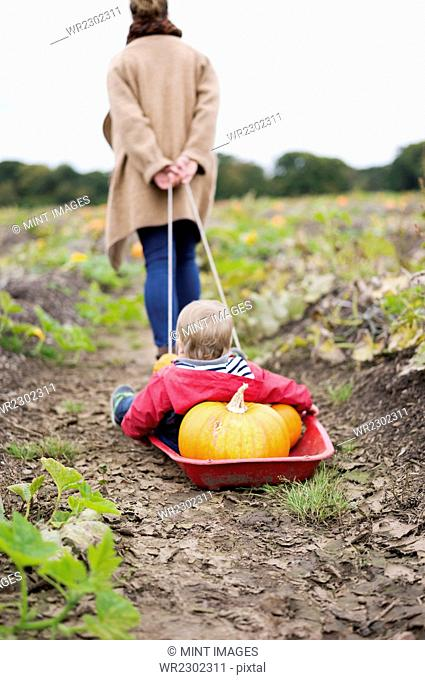 A woman towing a small red sledge with a child and a load of pumpkins