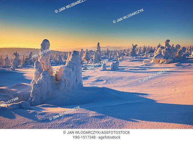 Snowy trees at the Szrenica peak, Karkonosze National Park, Poland, Europe
