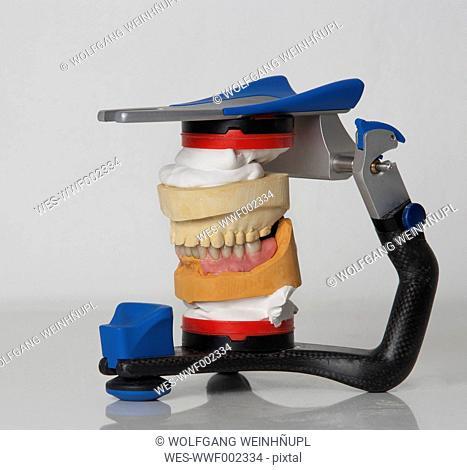Dentures in articulator, close up