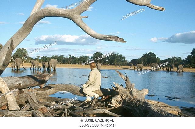 Woman Sitting on Drift Wood Viewing Elephant's Loxodonta africana  Botswana, Africa