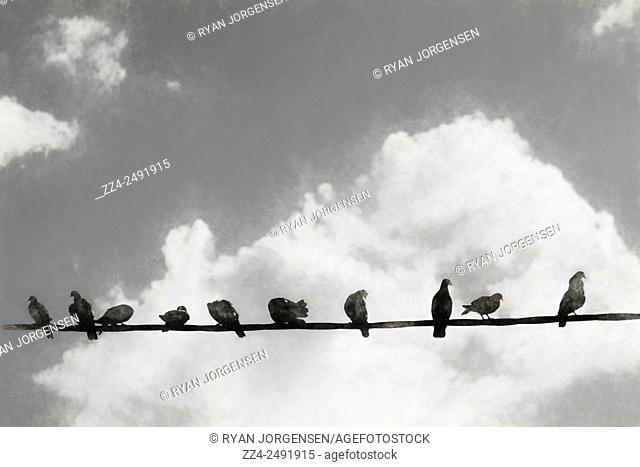 Black and white mixed media charcoal and photo artwork of a group of birds on a power line backdropped by clouds. Network of the bird line