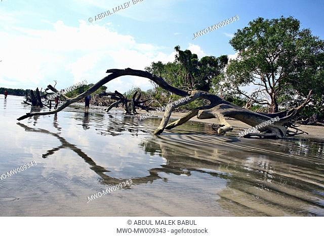 A UNESCO World Heritage Site, the Sundarbans is the largest mangrove forest in the world and lies on a delta at the mouth of the Ganges River