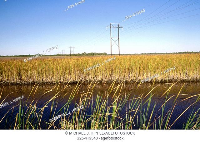 Grasses and power lines. Everglades. Florida. USA