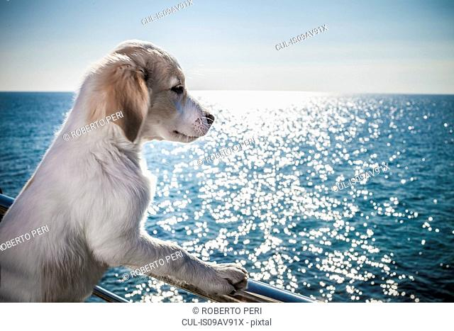 Side view of dog leaning against railing looking at ocean