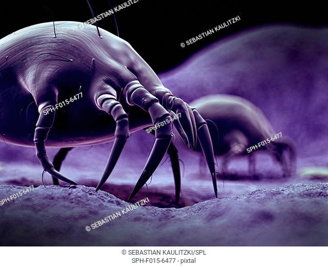 Dust mites, illustration