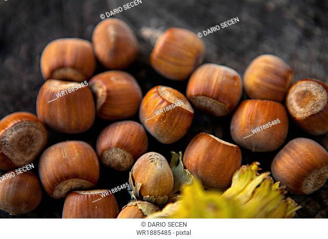 Fresh Hazelnuts, Croatia, Slavonia, Europe