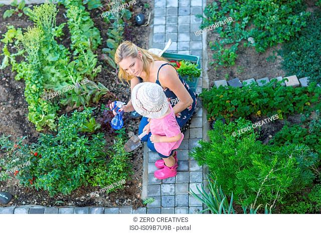 Mother and daughter tending to garden, overhead view