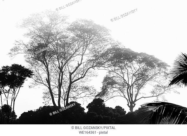 Rainforest Landscape (B&W) - La Laguna del Lagarto Lodge, Boca Tapada, Costa Rica