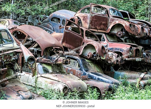 Old cars abandoned in forest