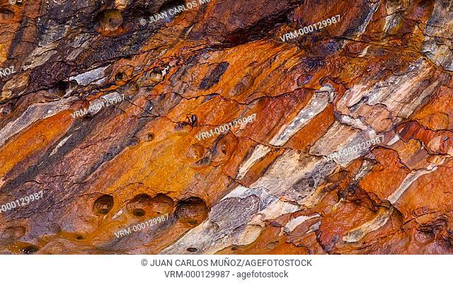 Detail of Jaizkibel Coast. Gipuzkoa. Basque Country. Spain