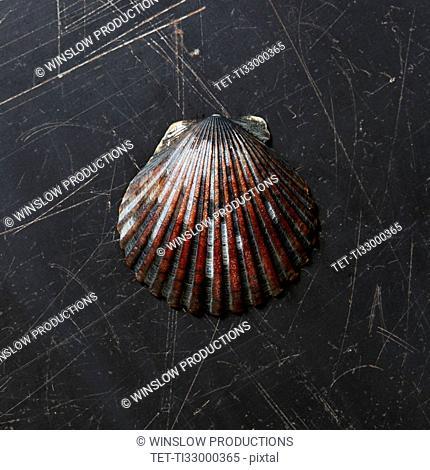 Seashell on dark surface