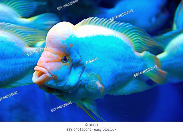 Beautiful tropical fish on the deep sea