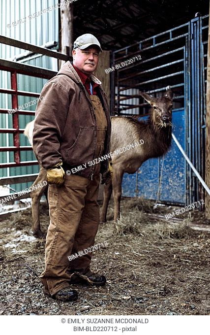 Caucasian farmer working with elk in stable