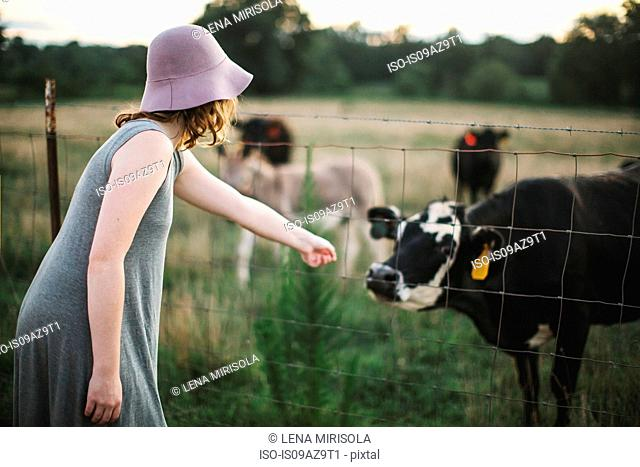 Woman reaching through wire fence to touch cow