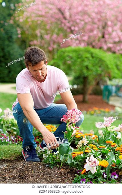Gardener cutting flowers, Pruning secateurs, Hand tool, Garden,