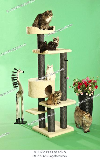 different cats and kittens on scratching post